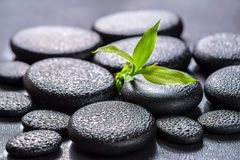 Beautiful spa concept of green branch bamboo on zen basalt stone. S with drops, closeup stock photo