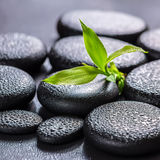 Beautiful spa concept of green branch bamboo on zen basalt stone Royalty Free Stock Photo