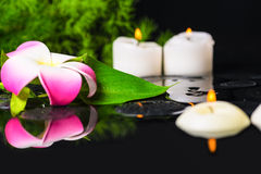 Beautiful spa concept of green leaf calla lily, plumeria with dr Stock Photography