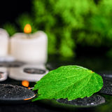 Beautiful spa concept of green leaf hibiscus with drops and cand Royalty Free Stock Images