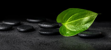 Beautiful spa concept of green leaf and zen stones on black back Stock Photos