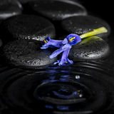 Beautiful spa concept of iris flower and black zen stones on rip Royalty Free Stock Photo