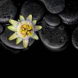 Beautiful spa concept of passiflora flower on zen stones with re. Flection in water, closeup stock photos
