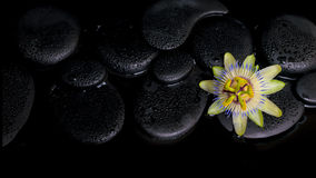 Beautiful spa concept of passiflora flower on zen stones Stock Photos
