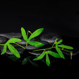 Beautiful spa concept of passiflora green branch on zen stones w Stock Photography
