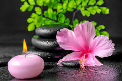 Beautiful spa concept of pink hibiscus flower, fern branch, cand Stock Images