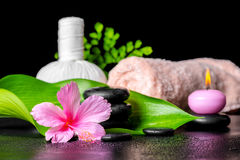 Beautiful spa concept of pink hibiscus flower, leaves, thai herb Stock Images