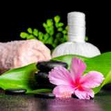 Beautiful spa concept of pink hibiscus flower, leaves, thai herb Royalty Free Stock Image