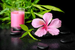 Beautiful spa concept of pink hibiscus flower, twig bamboo and p Royalty Free Stock Image