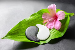 Beautiful spa concept of pink hibiscus flower and Yin-Yang of st Royalty Free Stock Images