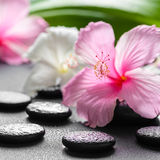 Beautiful spa concept of pink and white hibiscus flowers, leaf Royalty Free Stock Images
