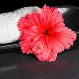 Beautiful spa concept of red hibiscus flower with dew and white Stock Images