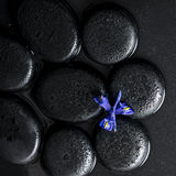 Beautiful spa concept top down of iris flower and black zen stones Royalty Free Stock Photography