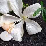 Beautiful spa concept of white hibiscus, twig passionflower, sto Royalty Free Stock Photos