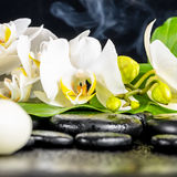 Beautiful spa concept of white orchid flower, phalaenopsis, gree Royalty Free Stock Image