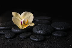 Beautiful spa concept  of yellow orchid (phalaenopsis) Stock Photos