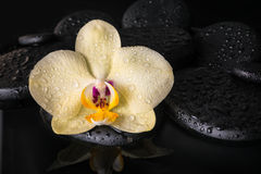 Beautiful spa concept  of yellow orchid, phalaenopsis Stock Photo