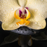 Beautiful spa concept  of yellow orchid (phalaenopsis) Royalty Free Stock Photo