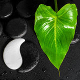 Beautiful spa concept of Yin-Yang stone texture and green leaf C Royalty Free Stock Photography
