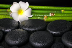 Beautiful spa concept of zen basalt stones, white flower frangip Royalty Free Stock Photos