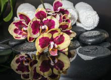 Beautiful Spa concept of zen stones, blooming twig orchid Stock Photo