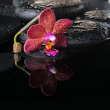 Beautiful spa concept of zen stones with drops, purple orchid Stock Photos
