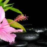 Beautiful spa samenstelling van roze hibiscusbloem en takjebambo Stock Afbeeldingen