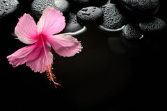Beautiful spa setting of blooming pink hibiscus and zen stones. With drops on water, closeup stock images