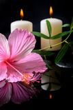 Beautiful spa setting of delicate pink hibiscus, green tendril Royalty Free Stock Image