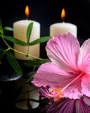 Beautiful spa setting of delicate pink hibiscus, green tendril Royalty Free Stock Photos