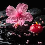 Beautiful spa setting of delicate pink hibiscus, zen stones Royalty Free Stock Image