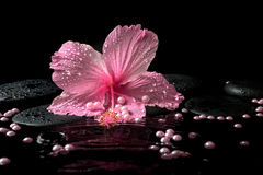 Beautiful spa setting of delicate pink hibiscus, zen stones Royalty Free Stock Photos
