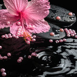 Beautiful spa setting of delicate pink hibiscus, zen stones Royalty Free Stock Photography