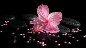 Beautiful spa setting of delicate pink hibiscus, zen stones Stock Image