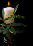 Beautiful spa setting of green tendril passionflower, candles Royalty Free Stock Photo