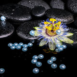 Beautiful spa setting of passiflora flower, zen stones with drop Stock Photos