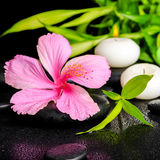 Beautiful spa setting of pink hibiscus flower, twigs bamboo Royalty Free Stock Photo