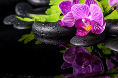 Beautiful spa setting of stripped lilac orchid (phalaenopsis) Stock Photos