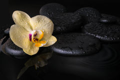Beautiful spa setting of yellow orchid (phalaenopsis) Royalty Free Stock Photo