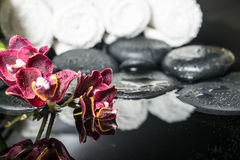 Beautiful spa setting of zen stones with drops and blooming twig Royalty Free Stock Images