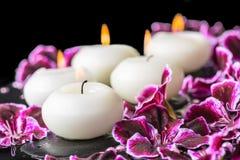 Beautiful spa still life of blooming dark purple geranium flower Stock Image