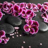 Beautiful spa still life of blooming dark purple geranium flower Royalty Free Stock Images