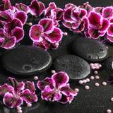 Beautiful spa still life of blooming dark purple geranium flower Stock Photos