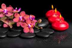 Beautiful spa still life of blooming twig red orchid flower, pha Royalty Free Stock Photos