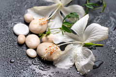 Beautiful spa still life of delicate white hibiscus, twig passio Stock Photos
