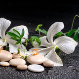 Beautiful spa still life of delicate white hibiscus, twig passio Royalty Free Stock Photo