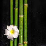 Beautiful spa still life of frangipani flower and natural bamboo Royalty Free Stock Images