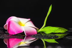 Beautiful spa still life of green branch bamboo, plumeria flower Royalty Free Stock Images