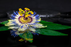 Beautiful spa still life of passiflora flower on green leaf, zen Stock Photo