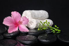 Beautiful spa still life of pink hibiscus, branch fern, drops Stock Photo